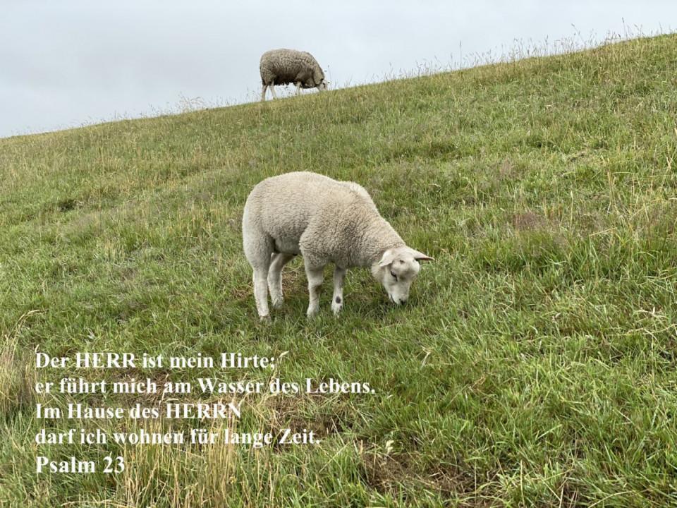 Text, Layout und Titelbild: Holm Eggers; Anzeigen: ON